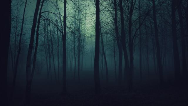 forest thmb